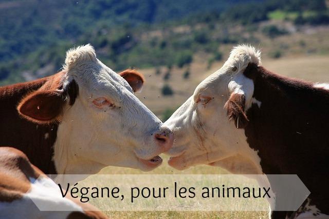 Végane, pour les animaux